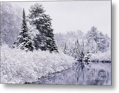 Forest Covered With Snow Metal Print by Rod Planck
