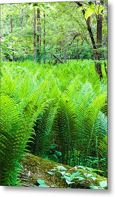 Metal Print featuring the photograph Forest Ferns   by Lars Lentz