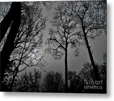Forest Fingers Metal Print