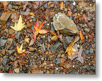 Forest Floor Beaver's Bend State Park Oklahoma Metal Print by Silvio Ligutti