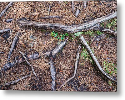 Forest Floor With Tree Roots Metal Print by Matthias Hauser