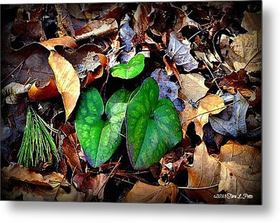 Metal Print featuring the photograph Forest Flora by Tara Potts