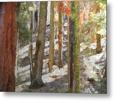 Forest For The Trees Metal Print by Jeff Kolker