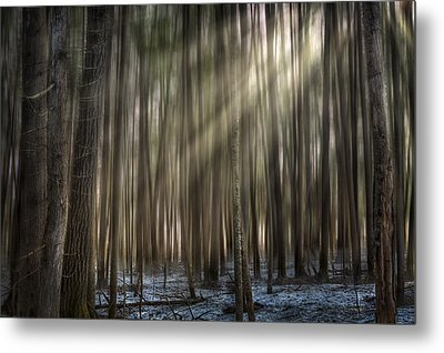 Forest Glow Metal Print by Gary Smith