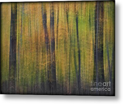 Forest Glow Metal Print by Susan Candelario