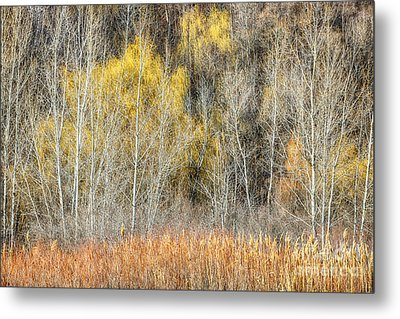Forest In Late Fall At Scarborough Bluffs Metal Print by Elena Elisseeva
