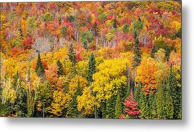 Forest In Peak Autumn Colors Metal Print