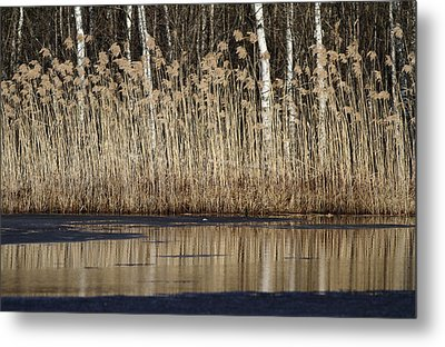 Forest Lake In Early Spring Metal Print