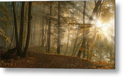 Forest Light Metal Print by Norbert Maier