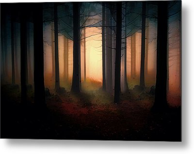 Forest Light Metal Print by Shanina Conway