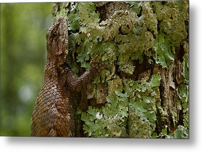 Forest Lizard 2 Metal Print by Greg Vizzi