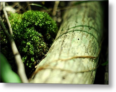 Metal Print featuring the photograph Forest Love by Rebecca Sherman