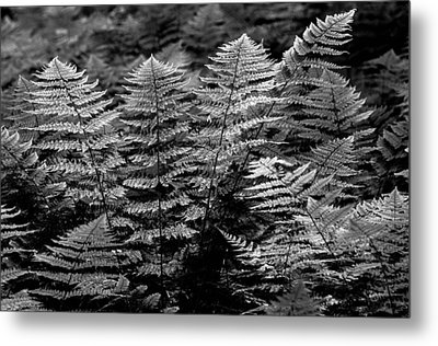 Metal Print featuring the  Forest Of Ferns by Haren Images- Kriss Haren