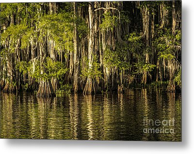 Forest On Caddo Lake Metal Print