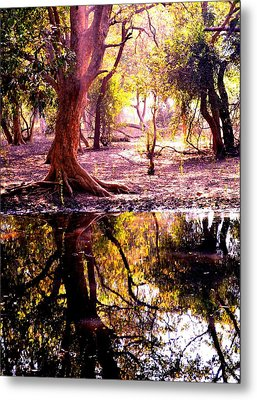 Forest Reflection Metal Print by Deepti Chahar