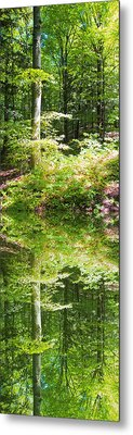 Metal Print featuring the photograph Forest Reflections by John Stuart Webbstock