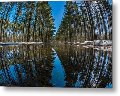 Forest Reflections Metal Print