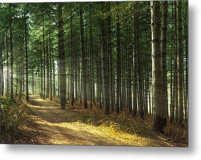 Forest Sun Rays Metal Print by Svetlana Sewell