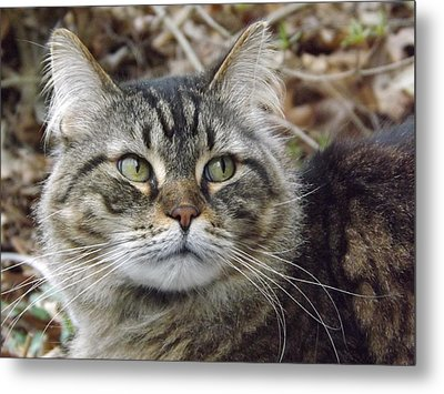 Forest The Cat Metal Print