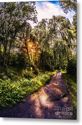 Forest Track Metal Print
