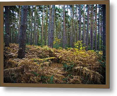 Metal Print featuring the photograph Forest Trees by Maj Seda