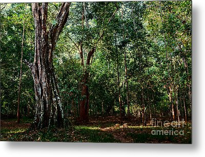 Forest View At Siem Reap Metal Print