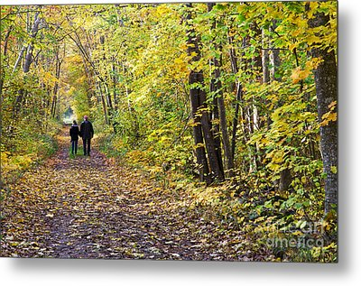 Forest Walk Metal Print