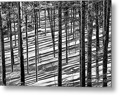 Forest's Shadows Metal Print