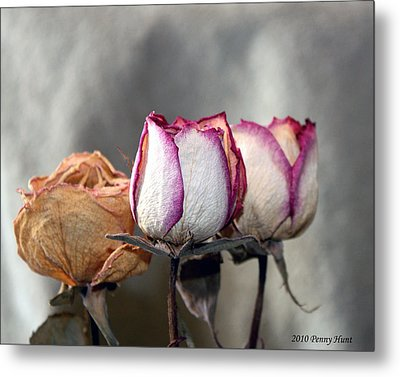 Metal Print featuring the photograph Forever Roses by Penny Hunt