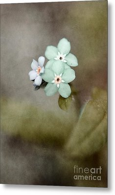 Forget Me Not 03 - S07bt07 Metal Print by Variance Collections
