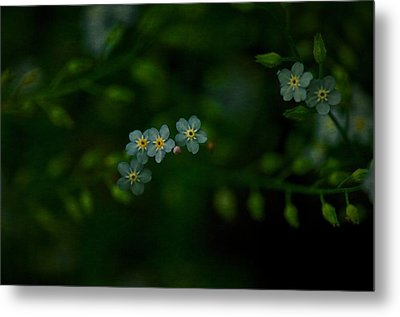 Forget  Me Not 4 Metal Print