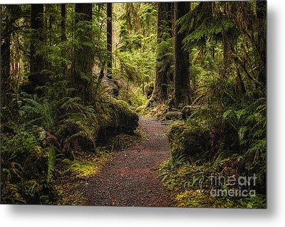 Forest Walk  Metal Print by Jennifer Magallon