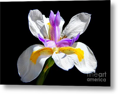 Fortnight Lily Metal Print by Mariola Bitner