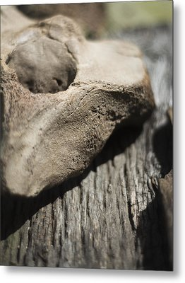 Metal Print featuring the photograph Fossil Bone With Weathered Wood by Rebecca Sherman