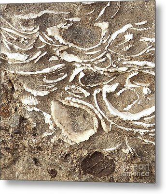 Metal Print featuring the photograph Fossils Layered In Sand And Rock by Artist and Photographer Laura Wrede