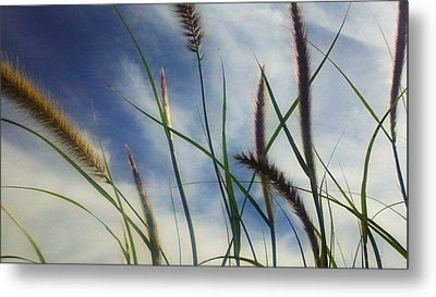 Metal Print featuring the photograph Fountain Grass by Richard Stephen