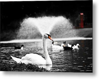 Fountain Swan Metal Print by Shane Holsclaw
