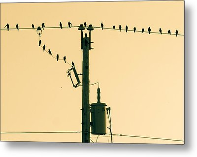 Four And Twenty Metal Print by Bill Pevlor