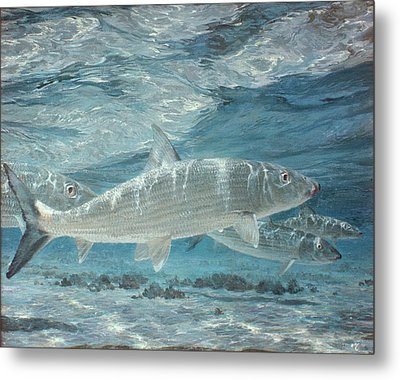 Four Bonefish Up With The Tide, 1972 Metal Print by Stanley Meltzoff / Silverfish Press
