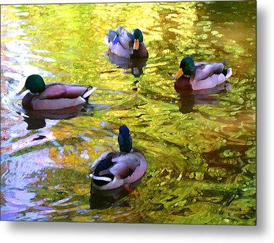 Four Ducks On Pond Metal Print by Amy Vangsgard