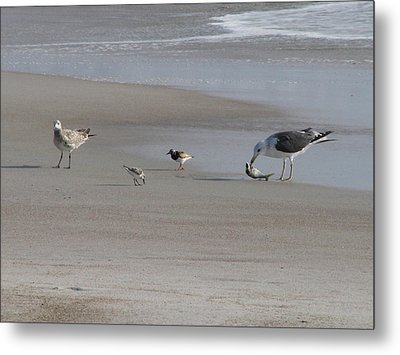 Four Feathers And A Fish Metal Print