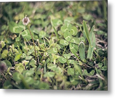 Four Leaf Clover Metal Print by Heather Applegate