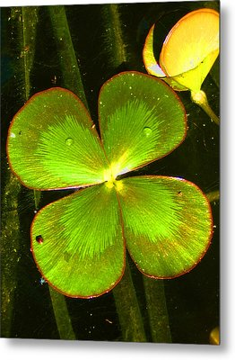 Four Leafed Clover Metal Print