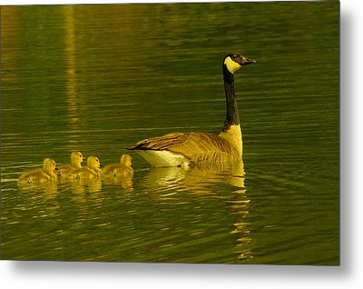 Four Little Miracles Metal Print by Jeff Swan