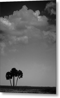 Metal Print featuring the photograph Four Palms by Bradley R Youngberg