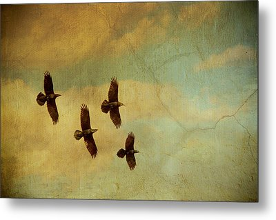 Metal Print featuring the photograph Four Ravens Flying by Peggy Collins