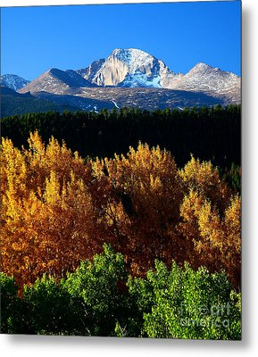 Metal Print featuring the photograph Four Seasons by Steven Reed