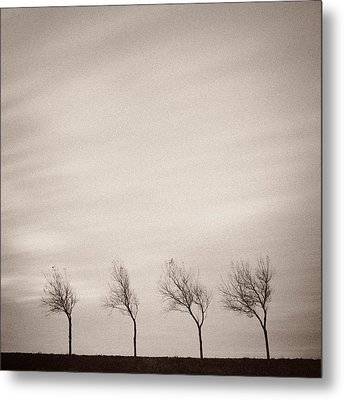 Four Trees Metal Print by Dave Bowman