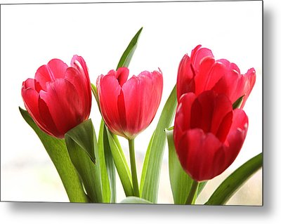 Four Tulips Metal Print by Menachem Ganon