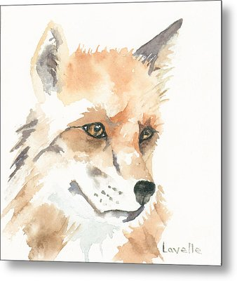 Fox Study 1 Metal Print by Kimberly Lavelle